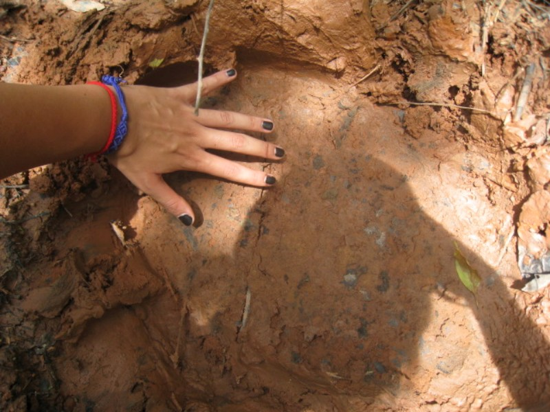 Elephant footprint where truck broke down